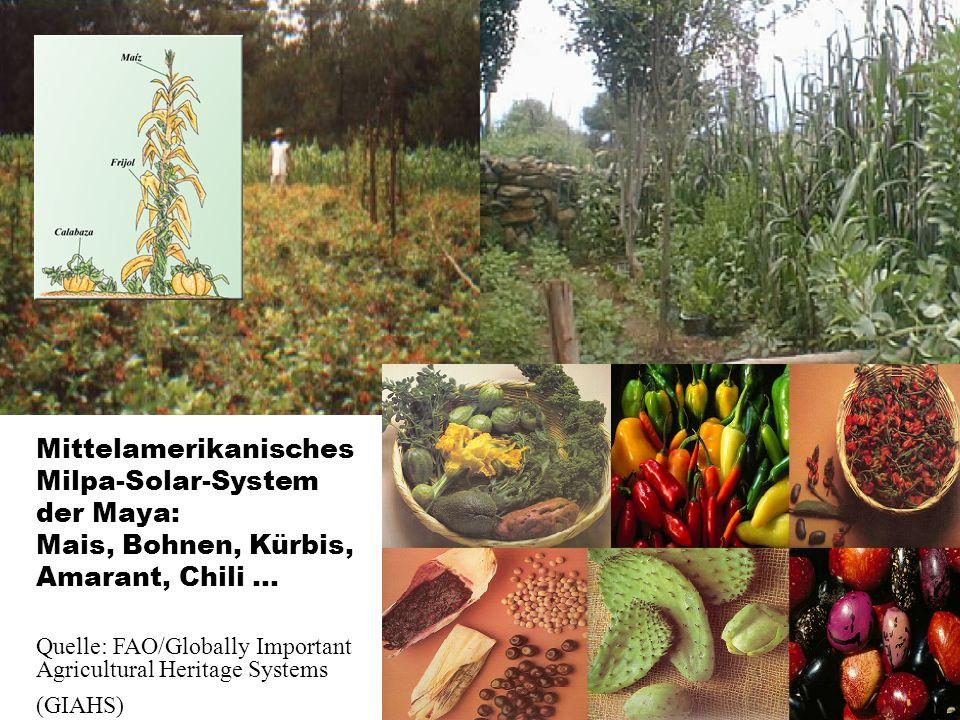 Mittelamerikanisches Milpa-Solar-System der Maya: Mais, Bohnen, Kürbis, Amarant, Chili …