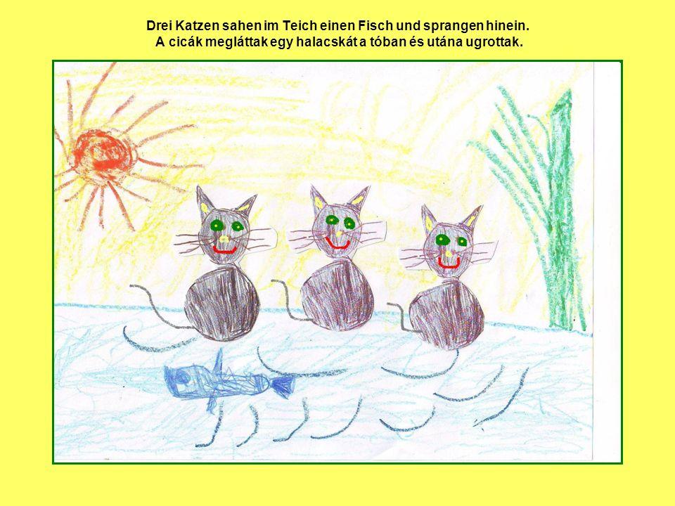 Drei Katzen sahen im Teich einen Fisch und sprangen hinein