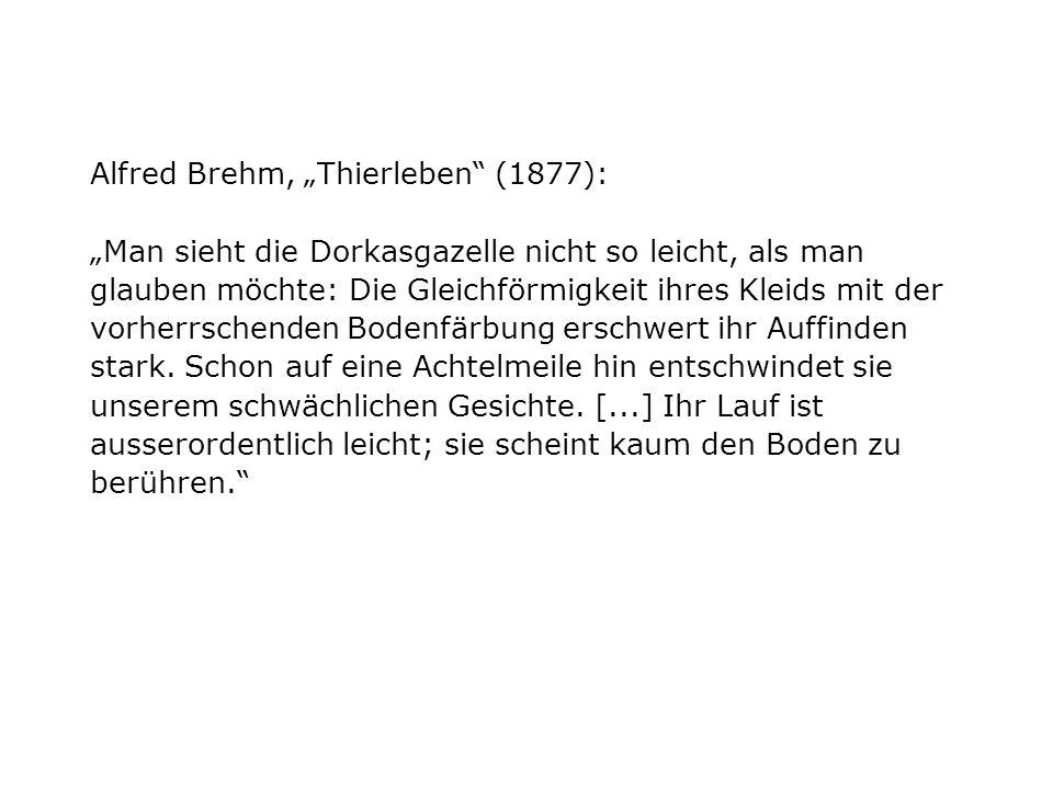 """Alfred Brehm, """"Thierleben (1877): """"Man sieht die Dorkasgazelle nicht so leicht, als man glauben möchte: Die Gleichförmigkeit ihres Kleids mit der vorherrschenden Bodenfärbung erschwert ihr Auffinden stark."""
