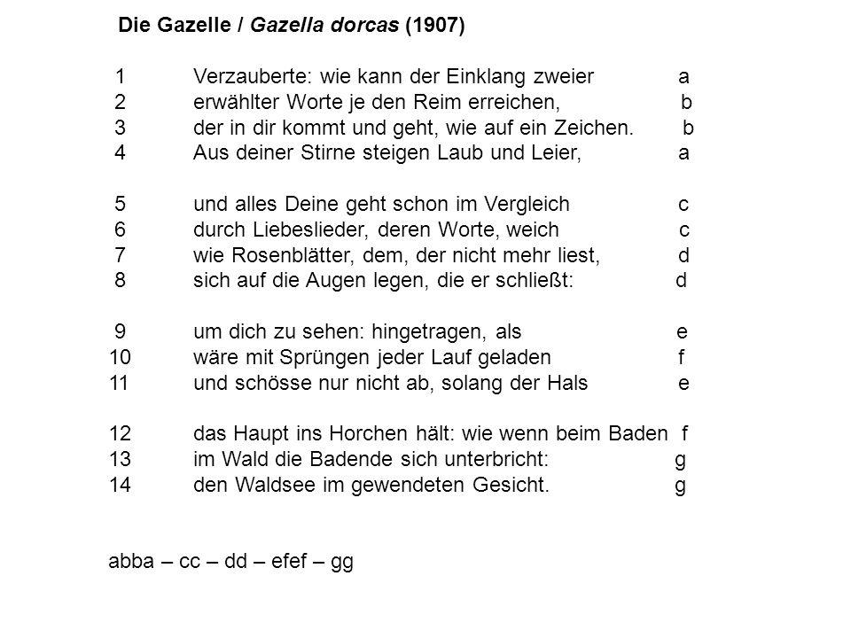 Die Gazelle / Gazella dorcas (1907) 1