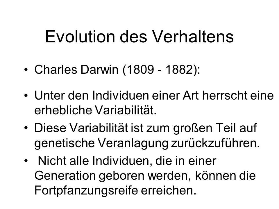 Evolution des Verhaltens