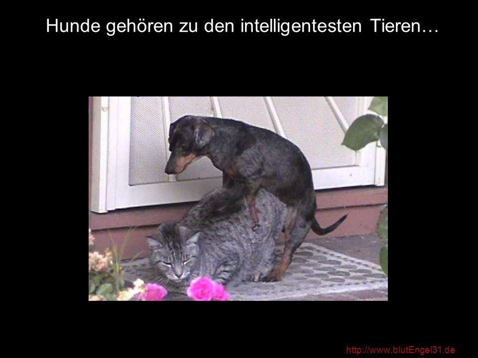 Hunde gehören zu den intelligentesten Tieren…