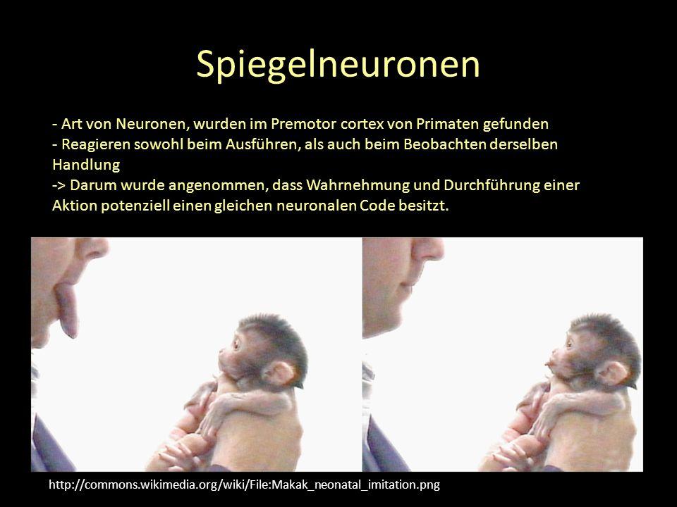 Spiegelneuronen - Art von Neuronen, wurden im Premotor cortex von Primaten gefunden.