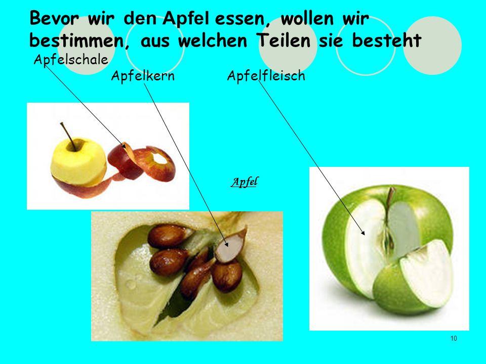 Bevor wir den Apfel essen, wollen wir bestimmen, aus welchen Teilen sie besteht Apfelschale Apfelkern Apfelfleisch