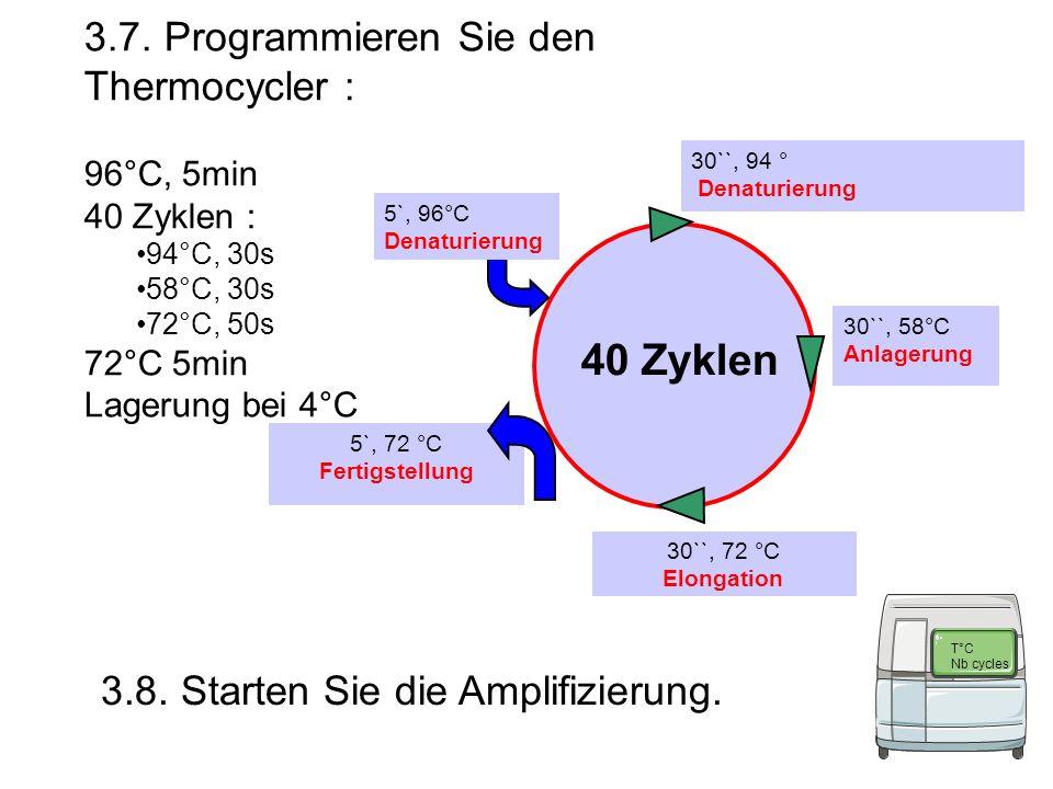 40 Zyklen 3.7. Programmieren Sie den Thermocycler :