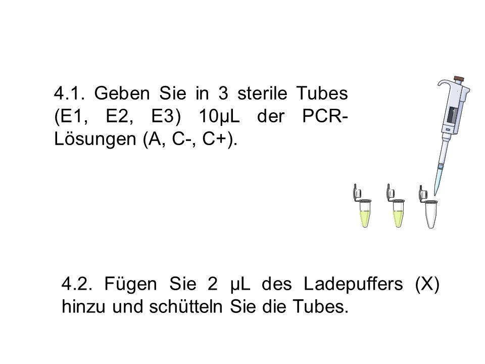 4.1. Geben Sie in 3 sterile Tubes (E1, E2, E3) 10µL der PCR-Lösungen (A, C-, C+).