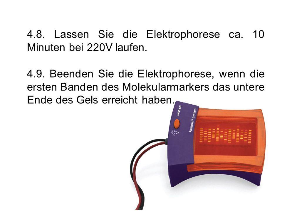 4.8. Lassen Sie die Elektrophorese ca. 10 Minuten bei 220V laufen.