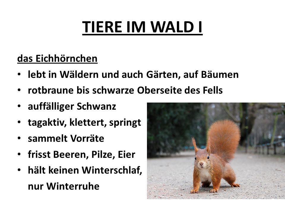 TIERE IM WALD I das Eichhörnchen