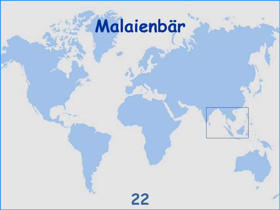 Malaienbär 22