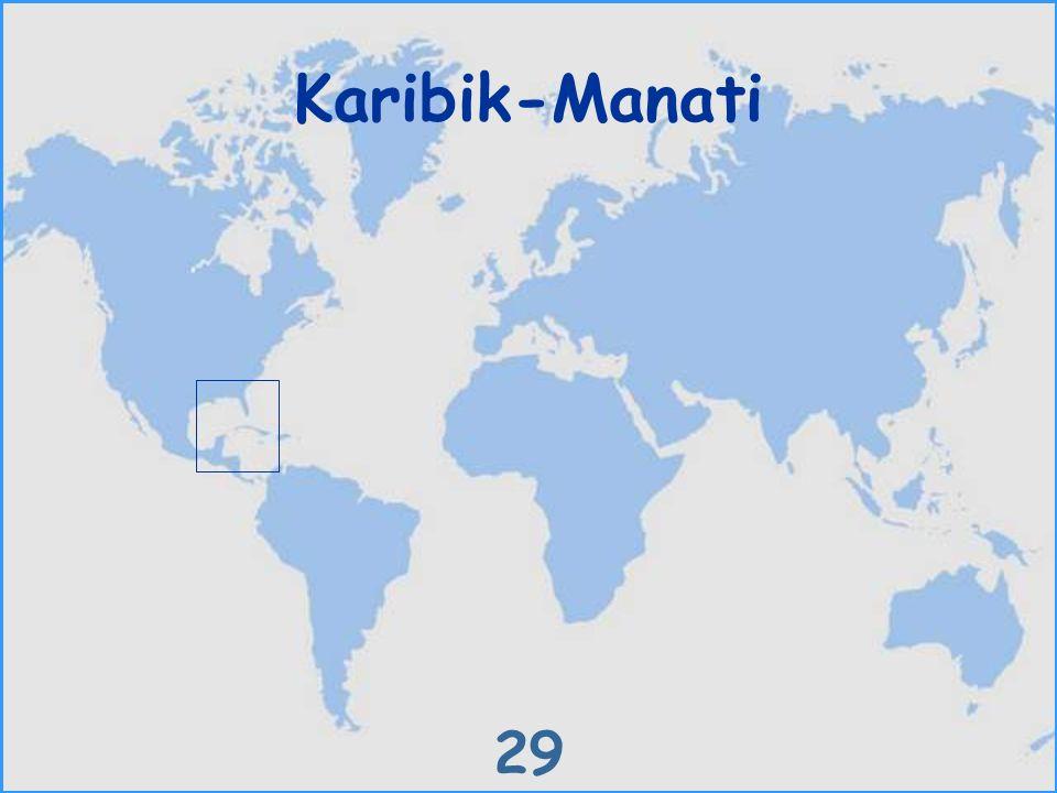 Karibik-Manati 29