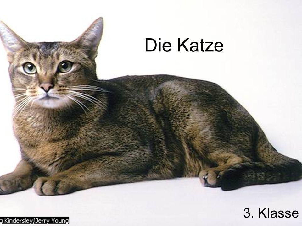 Die Katze 3. Klasse