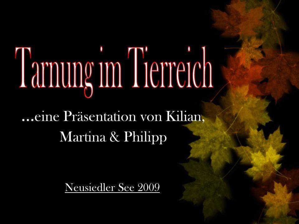 …eine Präsentation von Kilian, Martina & Philipp