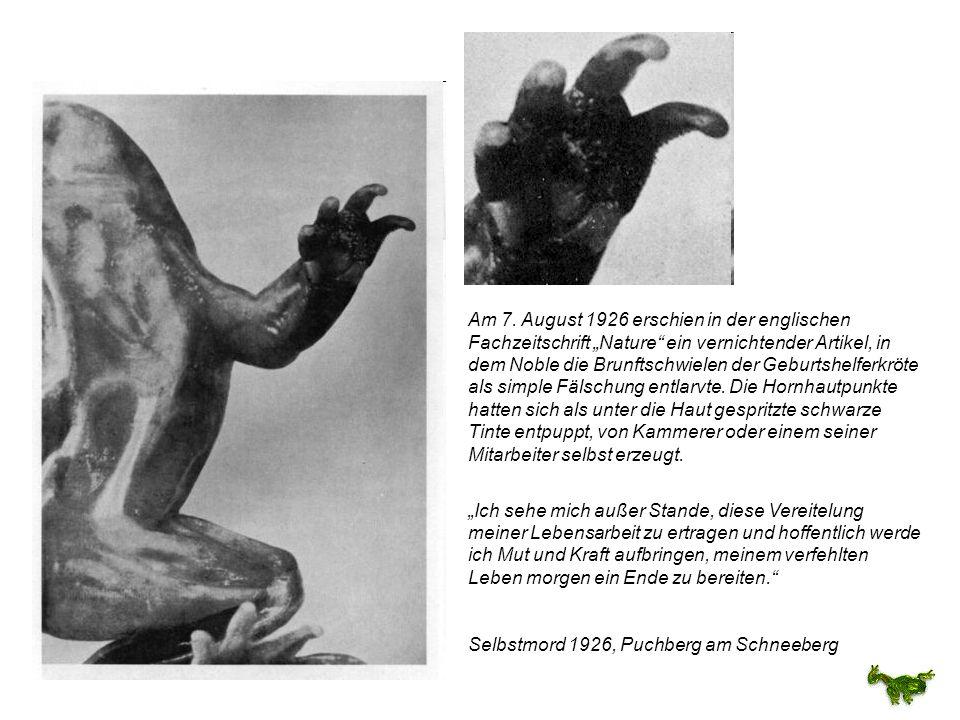 """Am 7. August 1926 erschien in der englischen Fachzeitschrift """"Nature ein vernichtender Artikel, in dem Noble die Brunftschwielen der Geburtshelferkröte als simple Fälschung entlarvte. Die Hornhautpunkte hatten sich als unter die Haut gespritzte schwarze Tinte entpuppt, von Kammerer oder einem seiner Mitarbeiter selbst erzeugt."""