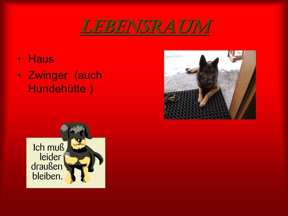 Lebensraum Haus Zwinger (auch Hundehütte )
