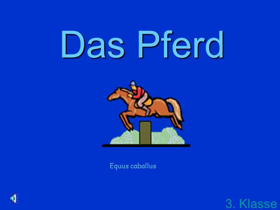 Das Pferd Equus caballus 3. Klasse