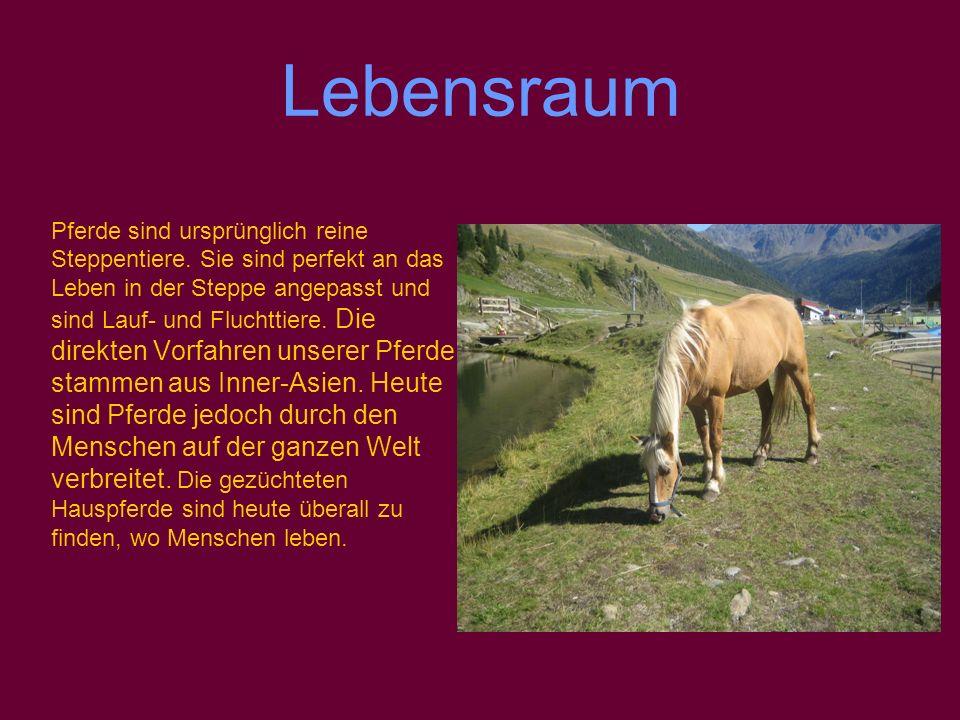 Lebensraum direkten Vorfahren unserer Pferde