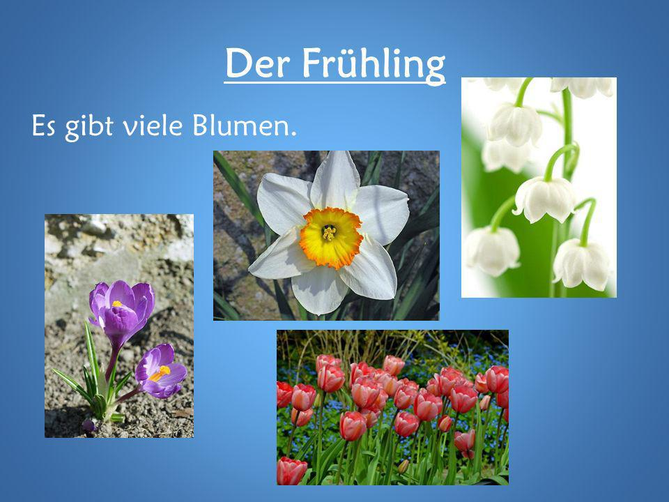 Der Frühling Es gibt viele Blumen.