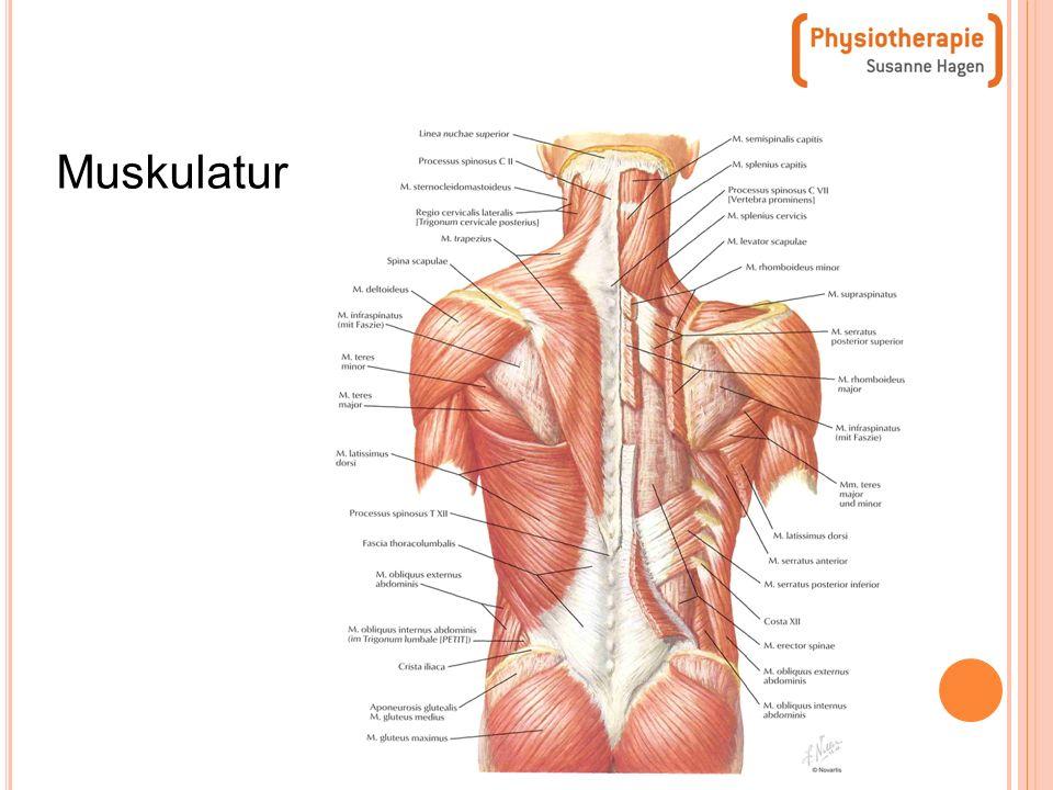 Großzügig Menschliche Rückenmuskulatur Anatomie Fotos - Anatomie ...