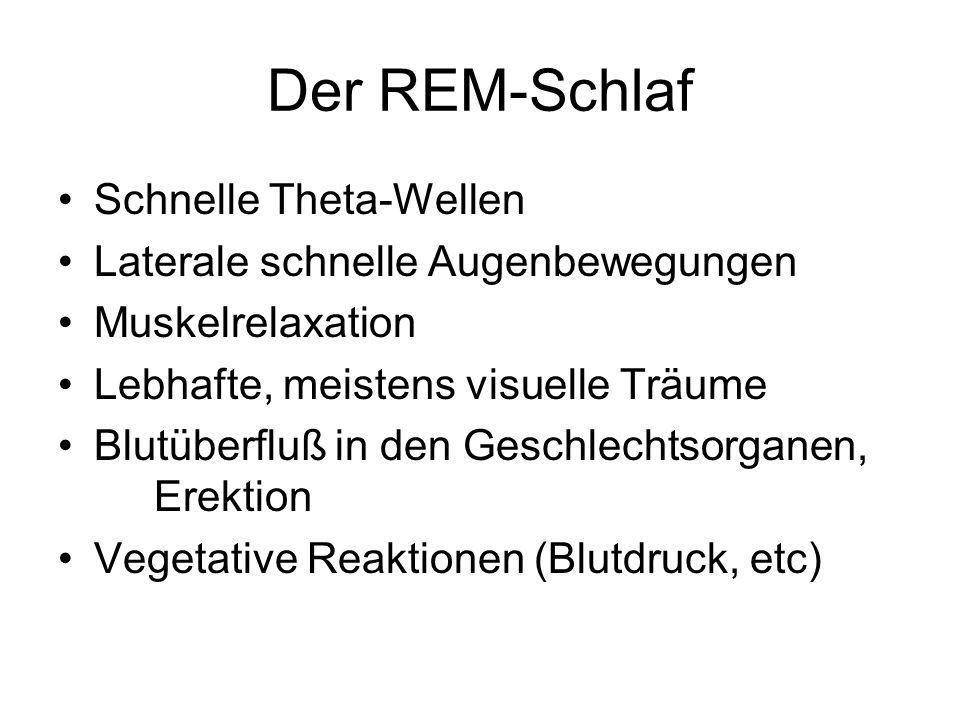 Der REM-Schlaf Schnelle Theta-Wellen Laterale schnelle Augenbewegungen