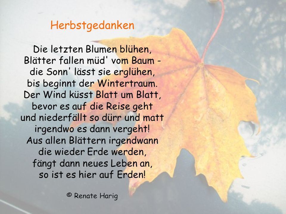 Herbstgedanken Die letzten Blumen blühen, Blätter fallen müd vom Baum - die Sonn lässt sie erglühen, bis beginnt der Wintertraum.