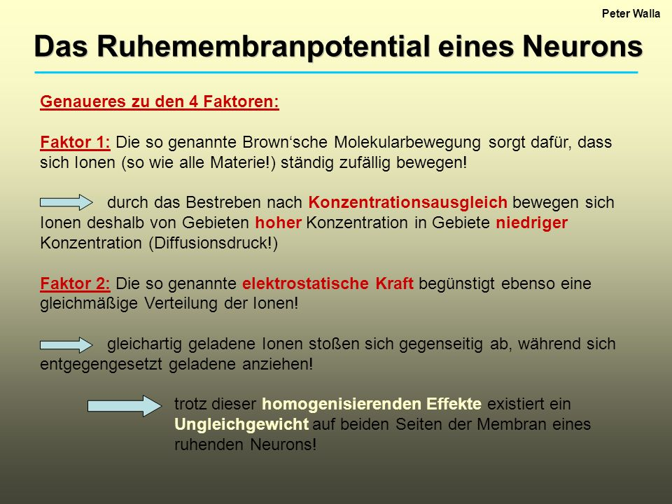 Das Ruhemembranpotential eines Neurons
