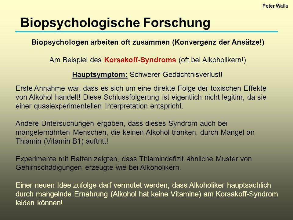 Biopsychologen arbeiten oft zusammen (Konvergenz der Ansätze!)