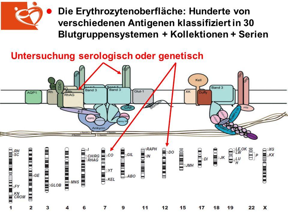 Die Erythrozytenoberfläche: Hunderte von verschiedenen Antigenen klassifiziert in 30 Blutgruppensystemen + Kollektionen + Serien