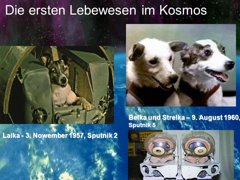 Die ersten Lebewesen im Kosmos.