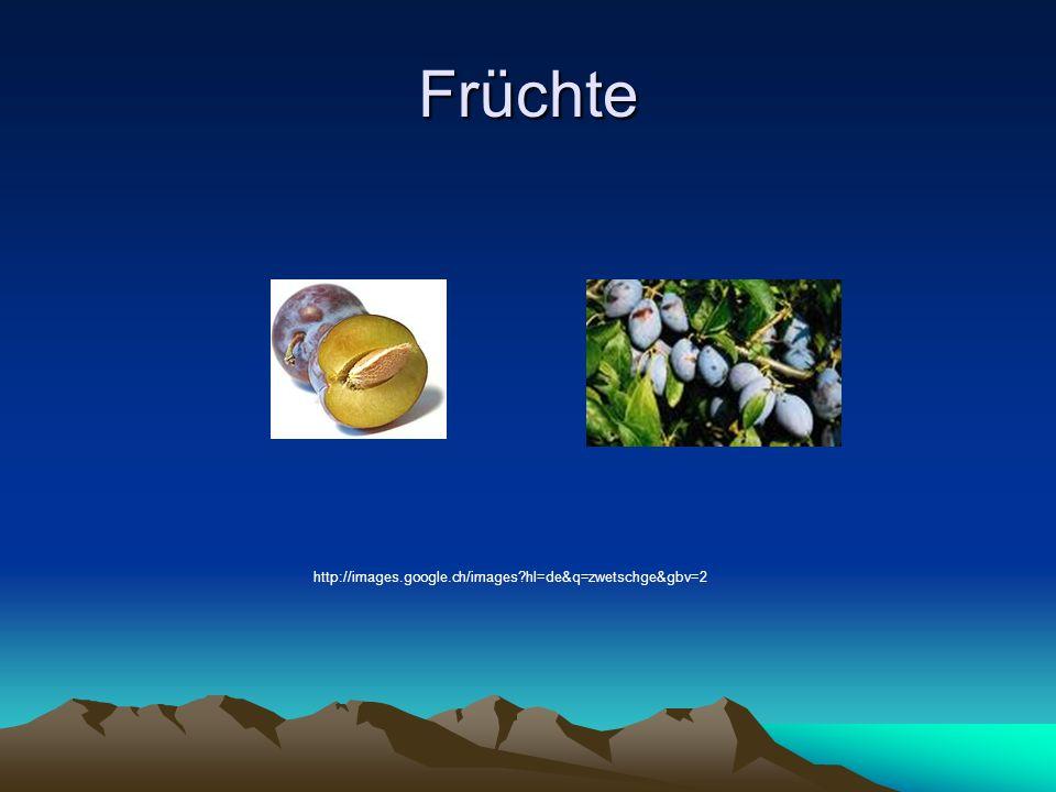 Früchte http://images.google.ch/images hl=de&q=zwetschge&gbv=2