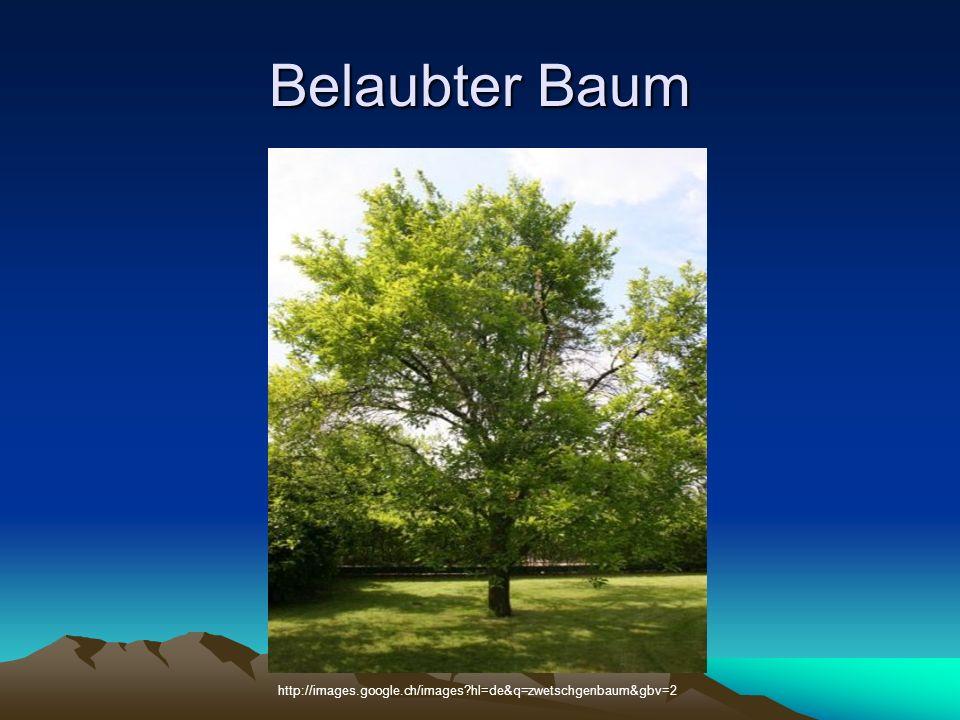 Belaubter Baum http://images.google.ch/images hl=de&q=zwetschgenbaum&gbv=2