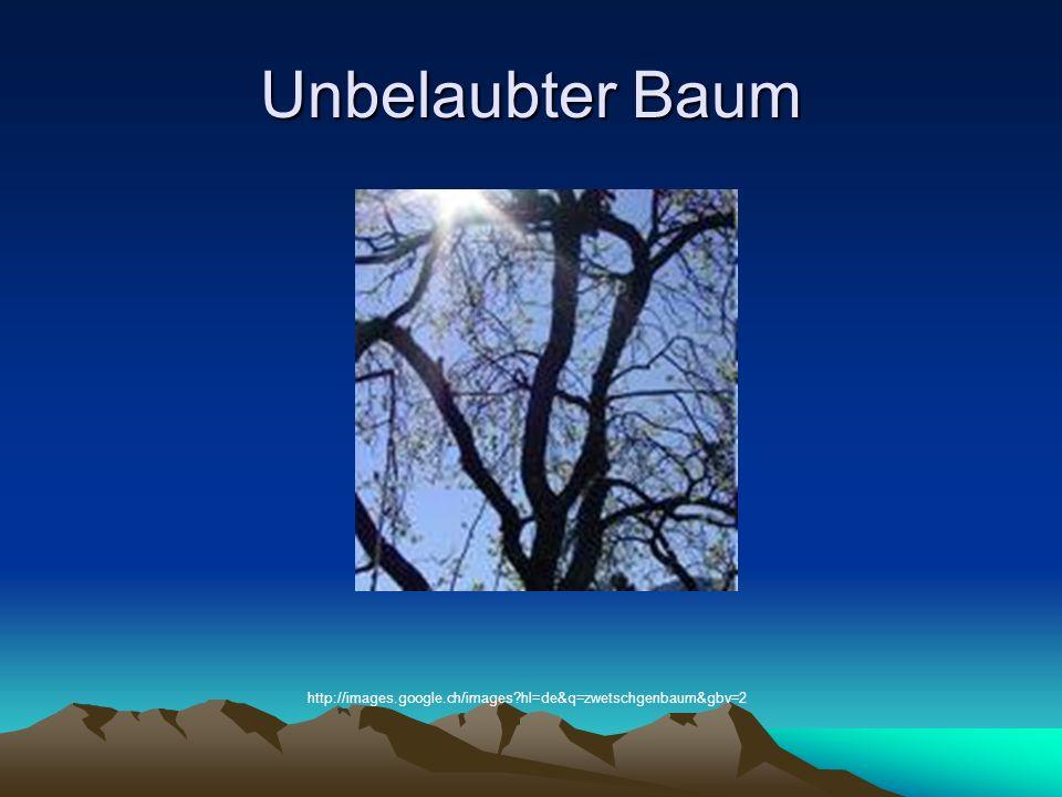 Unbelaubter Baum http://images.google.ch/images hl=de&q=zwetschgenbaum&gbv=2