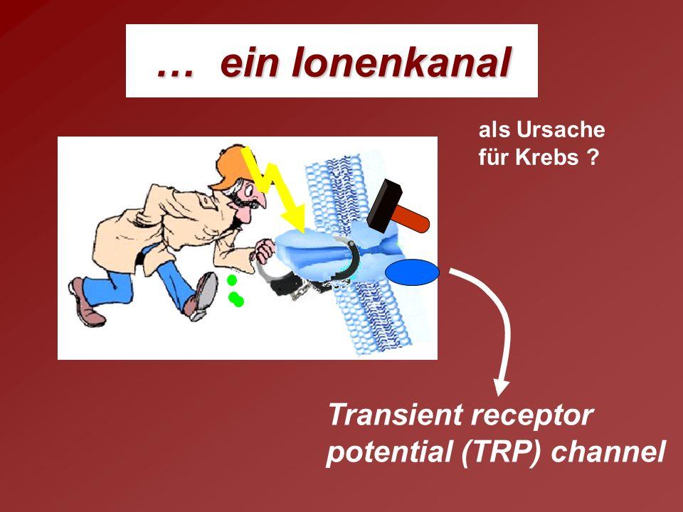 … ein Ionenkanal Transient receptor potential (TRP) channel