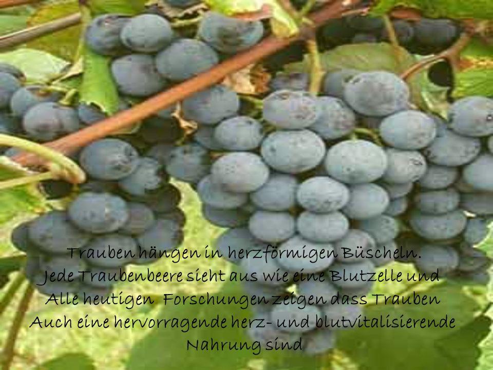 Trauben hängen in herzförmigen Büscheln.