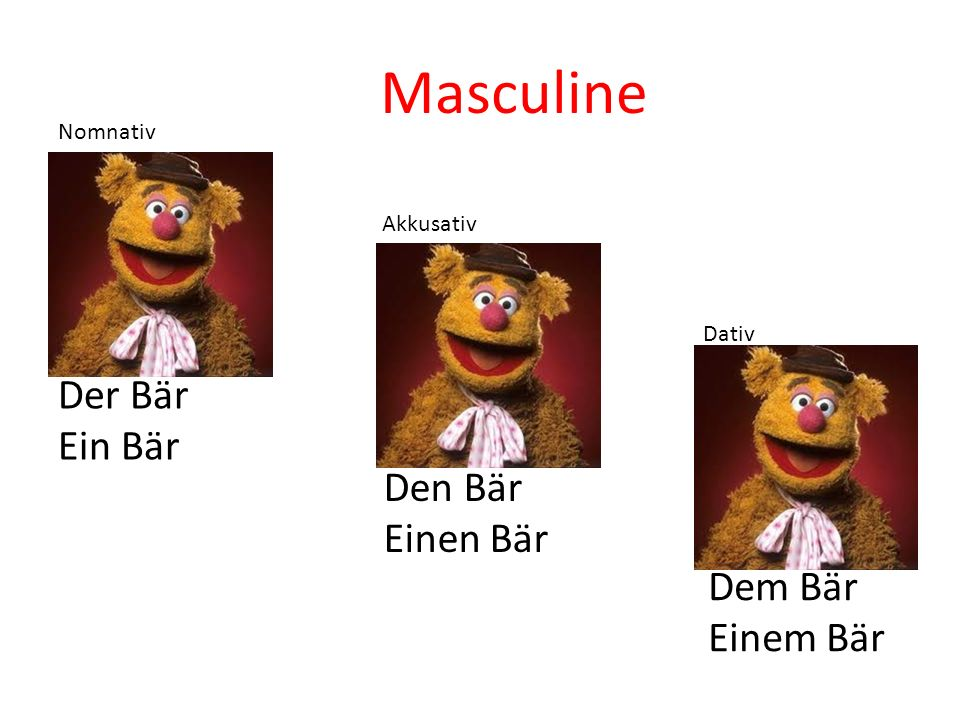Masculine Der Bär Ein Bär Den Bär Einen Bär Dem Bär Einem Bär Nomnativ