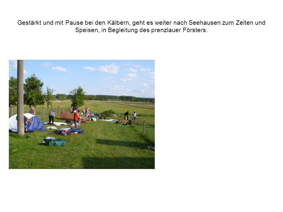 Gestärkt und mit Pause bei den Kälbern, geht es weiter nach Seehausen zum Zelten und Speisen, in Begleitung des prenzlauer Försters.