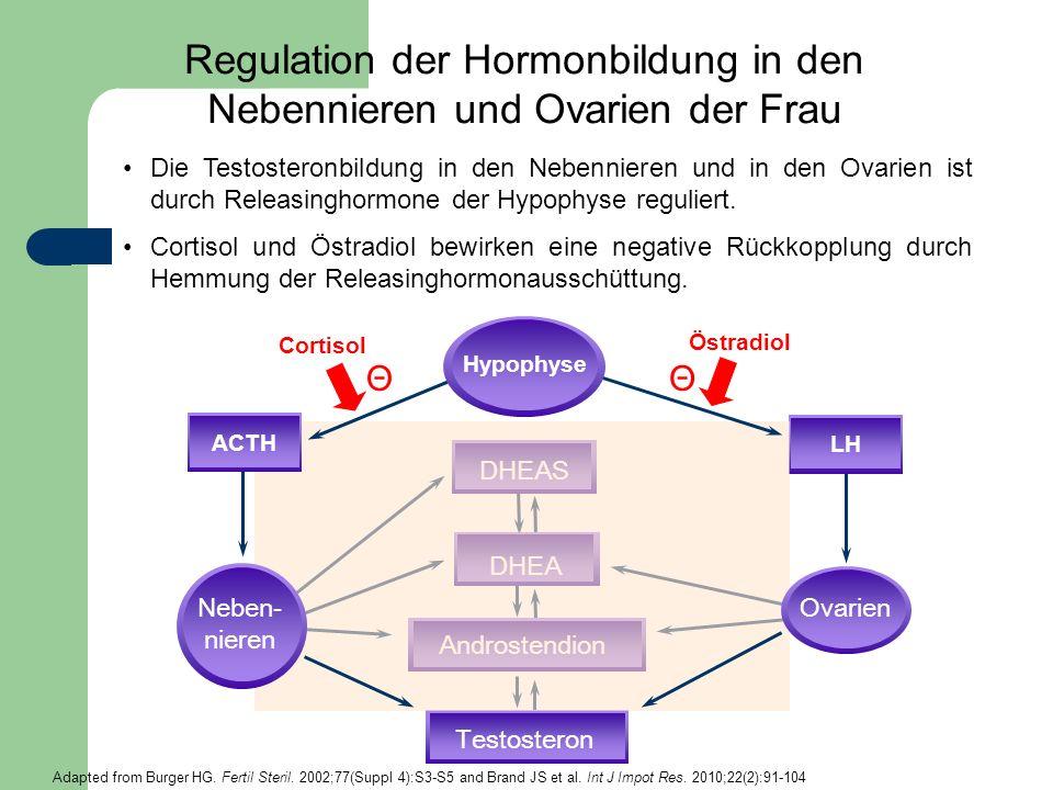 Regulation der Hormonbildung in den Nebennieren und Ovarien der Frau