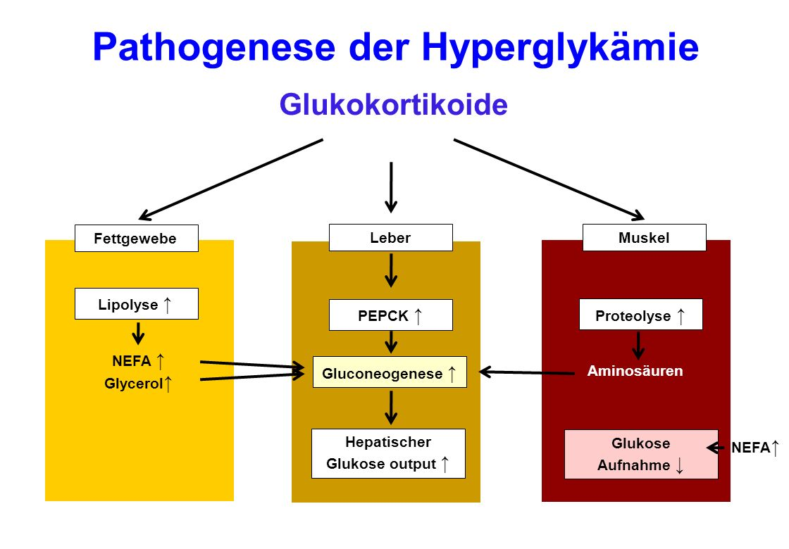 Pathogenese der Hyperglykämie