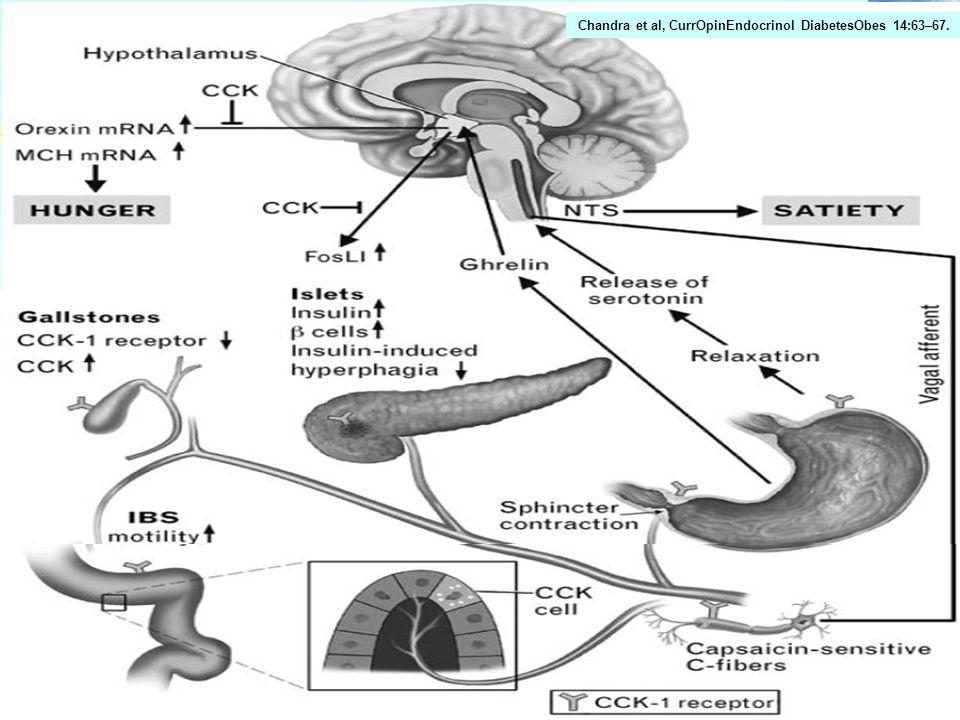 Chandra et al, CurrOpinEndocrinol DiabetesObes 14:63–67.