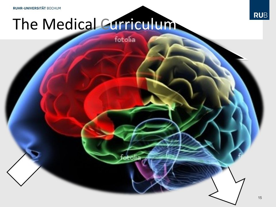 The Medical Curriculum