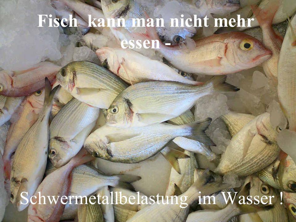 Fisch kann man nicht mehr essen -