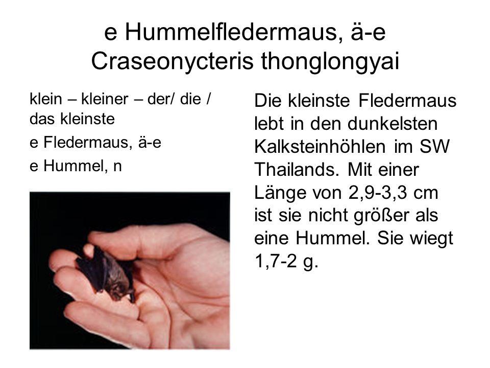 e Hummelfledermaus, ä-e Craseonycteris thonglongyai