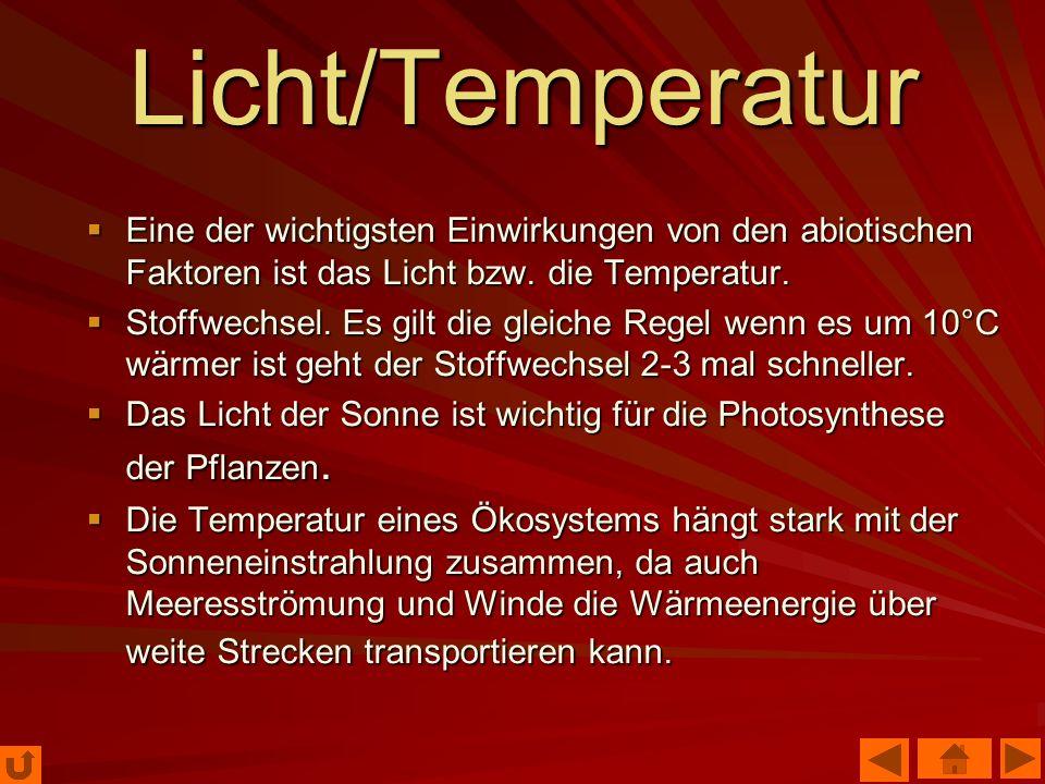 Licht/Temperatur Eine der wichtigsten Einwirkungen von den abiotischen Faktoren ist das Licht bzw. die Temperatur.