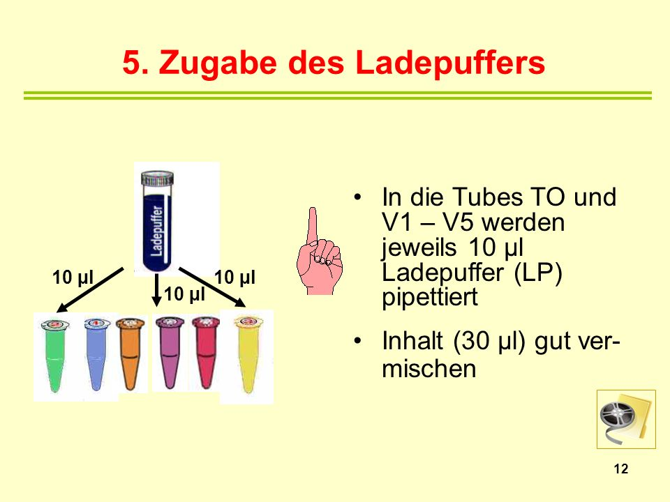 5. Zugabe des Ladepuffers