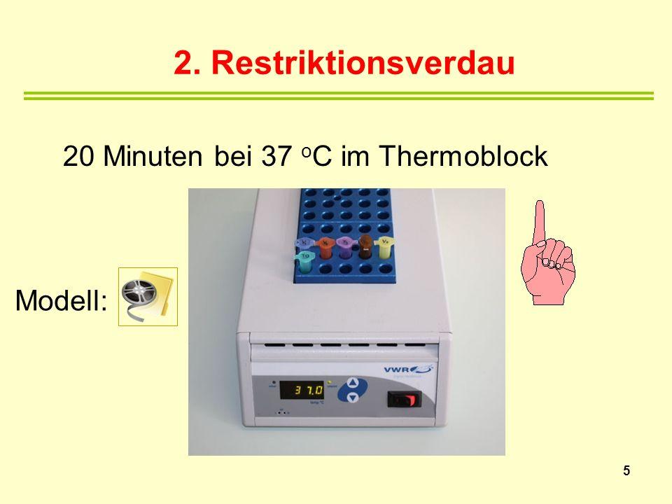 2. Restriktionsverdau 20 Minuten bei 37 oC im Thermoblock Modell: