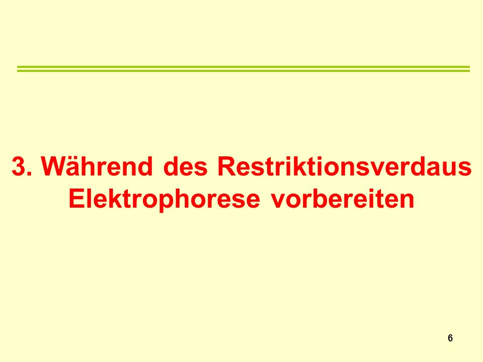 3. Während des Restriktionsverdaus Elektrophorese vorbereiten