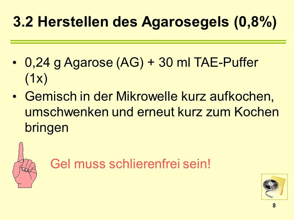 3.2 Herstellen des Agarosegels (0,8%)