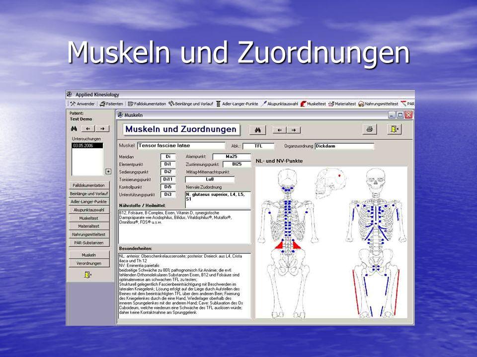 Muskeln und Zuordnungen