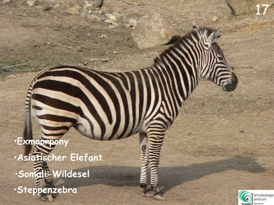 18 Schopfgibbon Schimpanse Erdmännchen Exmoorpony Blasentang