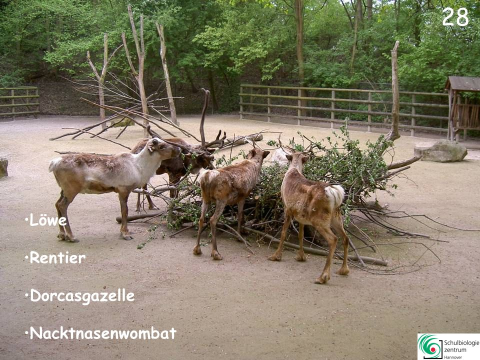29 Mendes-Antilope Muntjak Elenantilope Dorcasgazelle