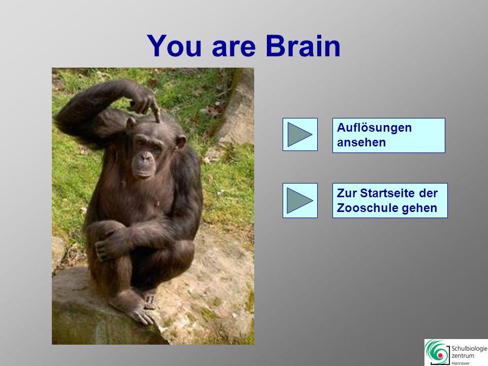 You are Brain Auflösungen ansehen Zur Startseite der Zooschule gehen